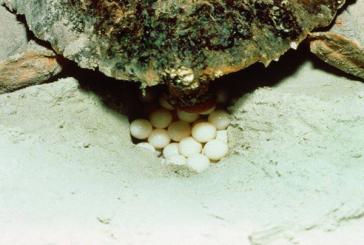 Turtle Nest at Bald Head Island