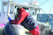 'Tuna' Bites: Tidbits from 'Wicked Tuna'